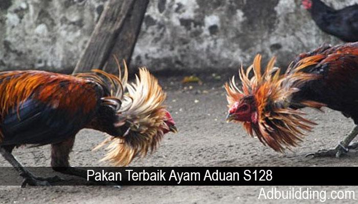 Pakan Terbaik Ayam Aduan S128