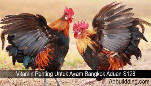 Vitamin Penting Untuk Ayam Bangkok Aduan S128